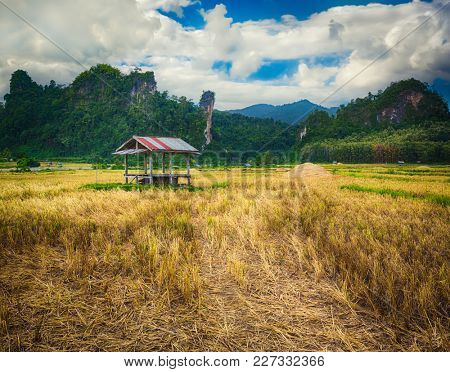 Rice field and mountains. Beautiful rural landscape. Vang Vieng, Laos.