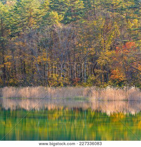 Goshiki-numa Five Colour Pond in Autumn, Urabandai, Fukushima, Japan