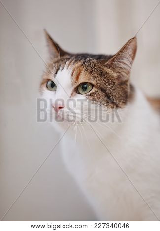 Portrait Of The Beautiful Cat Of A Multi-colored Color