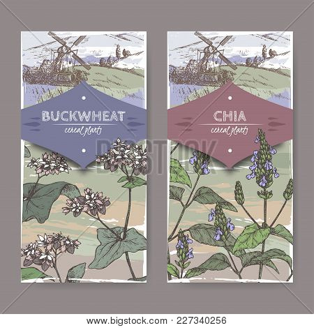 Set Of Two Labels With Fagopyrum Esculentum Aka Buckwheat And Salvia Hispanica Aka Chia Color Sketch