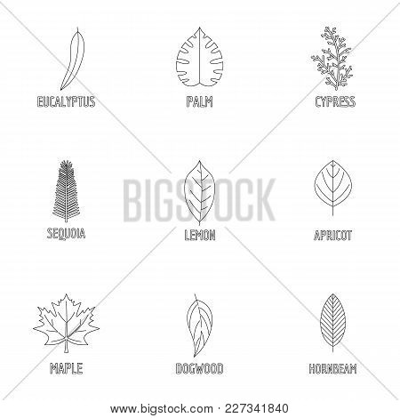 Leaf Structure Icons Set. Outline Set Of 9 Leaf Structure Vector Icons For Web Isolated On White Bac