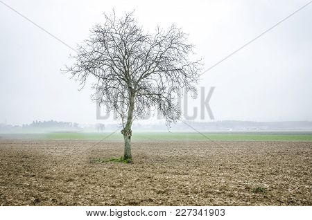 A Solitary Tree, Without Leaves Among The Countryside In Winter