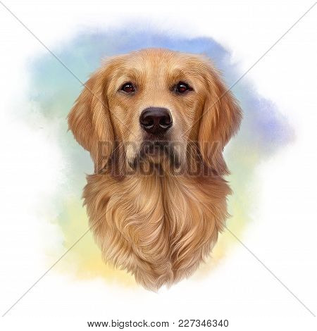 Illustration Of A Golden Retriever. Guide Dog, A Disability Assistance Dog. Watercolor Animal Collec