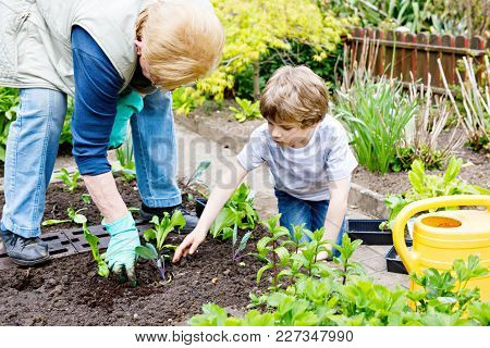 Cute Little Preschool Kid Boy And Grandmother Planting Green Salad In Spring. Happy Blond Child And