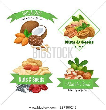Banners Or Labels With Nuts And Seeds. Cola Nut, Pumpkin Seed, Peanut And Sunflower Seeds. Pistachio