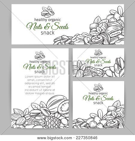 Corporate Style Template With Hand Drawn Nuts And Seeds. Cola Nut, Pumpkin Seed, Peanut And Sunflowe