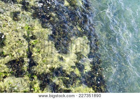 Seaweed On The Beach. Sea Waves Wash Algae On Rocks
