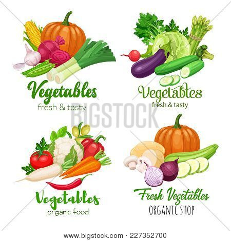 Healthy Food Banners With Vector Vegetables. Cabbage, Pepper, Beets, Or Carrots. Onion, Zucchini, Eg
