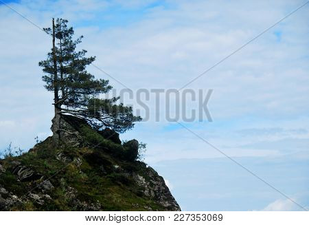 A Chinese Tree Stands Symbolically On Mount Cangshan In Dali, Yunnan, China