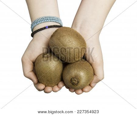 Close Up Of Child Hands Holding Three Kiwi Berries Isolated On White With Clipping Path At All Sizes