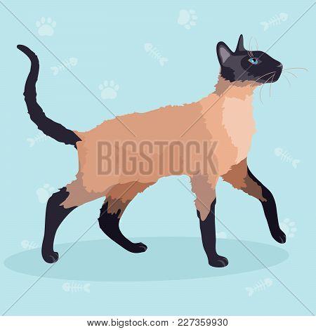 Cute Purebred Siamese Cat. Vector Illustration. Cartoon Character
