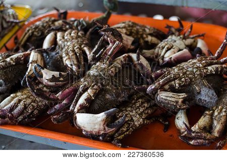 Freshly Extracted Sea Crabs Ready For Sale In The Market