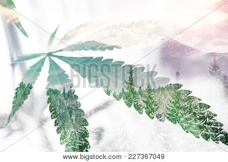 Marijuana Leaf With Winter Background High Quality Stock Photo