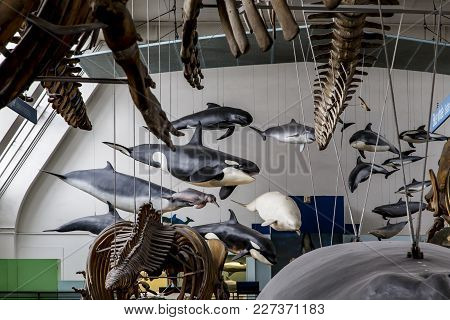 London, Great Britain - May 22, 2014: This Is A Fragment Of The Exhibition Of The Hall Of Mammals In