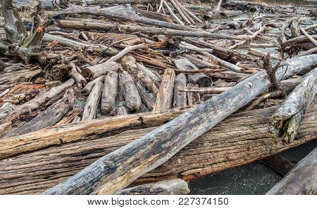 A Closeup Shot Of A Pile Of Driftwood In The Pacific Northwest.