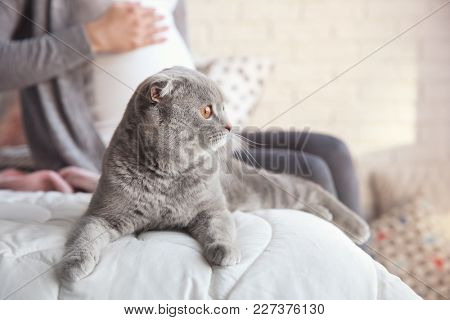 Cute pet cat and pregnant woman on bed