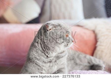 Cute cat on blurred background
