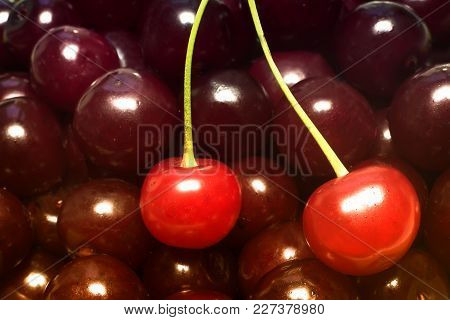 A Large Number Of Large Ripe Cherries With Stalks Background Image