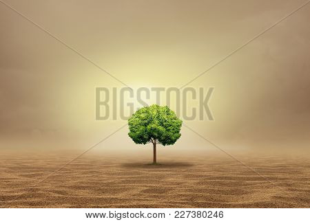 Stranded And Helpless As An Oasis Concept As A Vulnerable Single Tree In A Hot Arid Desert As A With