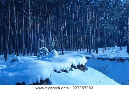 Spectacular Winter Evening On The Outskirts Of A Pine Forest Nobody Around The Mysterious Tall Trees