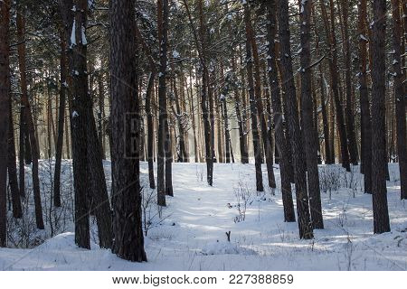 Visible Bright Sunlight Behind The Fantastic Coniferous Forest Breathtaking Atmosphere Beauty Of The