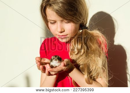Girl Child 7 Years Old Blonde With Long Wavy Hair Holds In The Hands Of Her Beloved Pet - Hamster. A