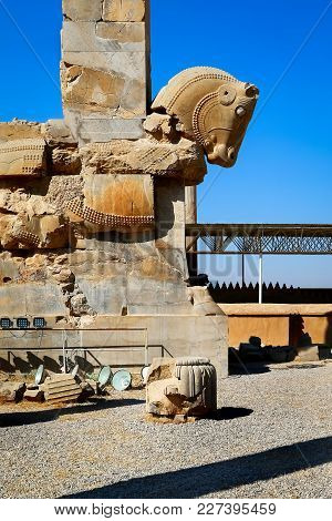 Stone Sculpture Of A Horse In Persepolis Against A Blue Sky With Clouds. Iran. Persia. Shiraz.
