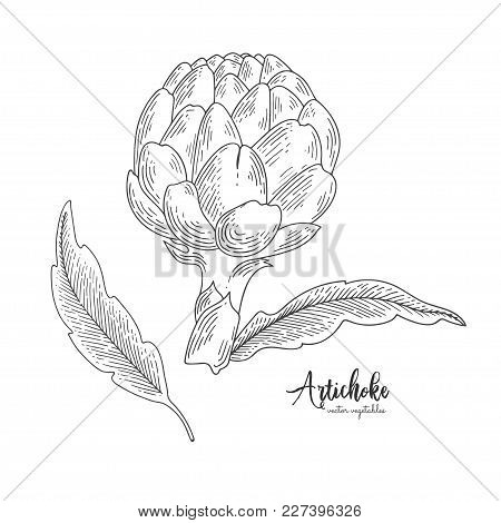 Isolated Artichoke. Engraved Art. Organic Sketched Vegetarian Objects. Vegetarian Food For Design Me