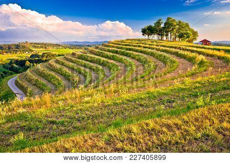 Terraced Hill Landscape In Medjimurje View, Northern Croatia