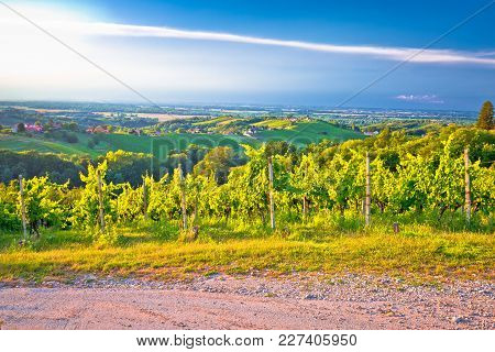 Vineyards And Green Landscape Of Medjimurje Region View From Hill, Northern Croatia