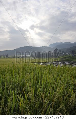 Stepped Rice Fields At Mae Klang Luang In The Doi Inthanon National Park, Chiang Mai, Northern Thail