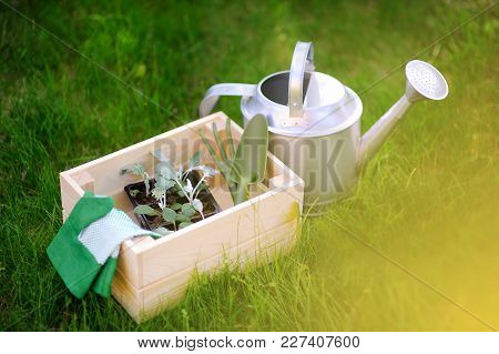 Wooden Box, Garden Gloves, Watering Can, Garden Tools And Young Seedling. Equipment For Gardening.