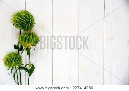 Diantus Green Trick Flowers On White Wood With Space For Text