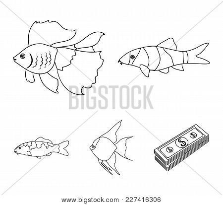 Discus, Gold, Carp, Koi, Scleropages, Fotmosus.fish Set Collection Icons In Outline Style Vector Sym