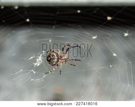 A Spider Spins It's Predator's Web To Trap A Victim.