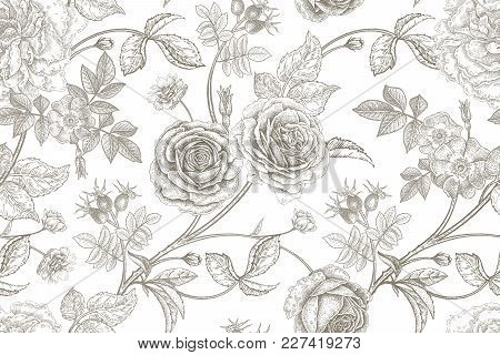 Roses, Flowers, Leaves, Branches And Berries Of Dog Rose. Floral Vintage Seamless Pattern. Black And
