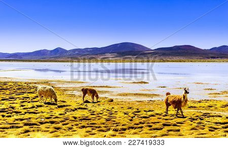 View On Lagoon Pastos Grandes In The Altiplano Of Bolivia