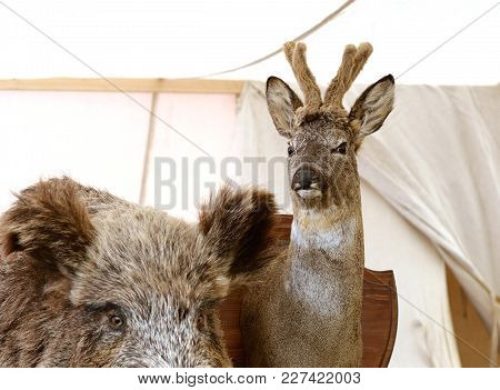 Stuffed Deer Head Mounted On The Wall.