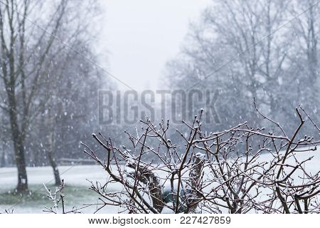 Misty Winter Landscape With Snow And Leafless Deciduous Trees In A Park In Germany In A Nature, Seas