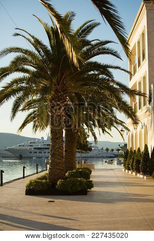 Palm Trees On The Waterfront In Tivat, Montenegro