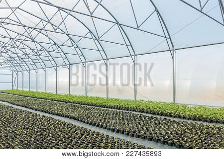 Young Plants Growing In A Greenhouse. Greenhouse Seedlings.