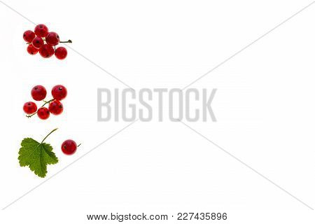 Ripe Redcurrants On White Background With Copy Space