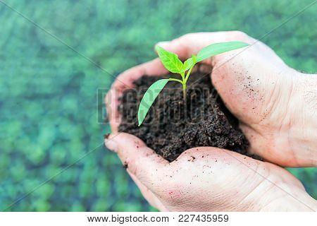 Hand Holding Green Seedling. Greenhouse Seedlings. Business