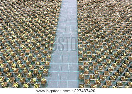 Baby Plants Growing Inside Of Pots Greenhouse Nursery.