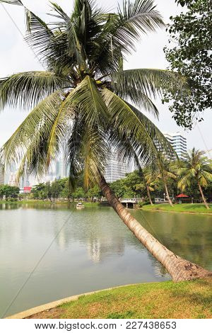 The palm tree was bent over lake. Park in the center of Bangkok