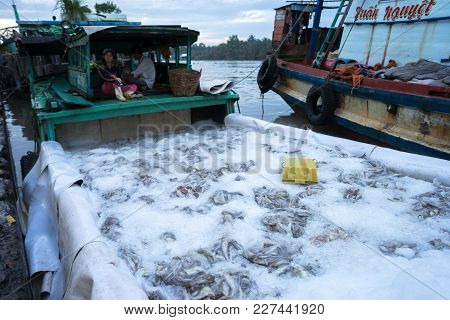 An Giang, Vietnam - Dec 6, 2016: Caught Fishes Preserverd By Ice In Tac Cau Fishing Port At Dawn, Me