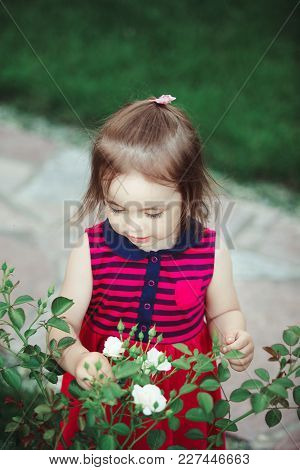 Cute Baby Looks At The White Spray Roses. Adorable Little Girl In Red Dress.