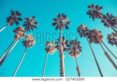 California High Palm Trees On The Beach, Blue Sky Background, Vintage Toned And Stylized, Retro Styl