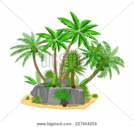 Tropical Green Palm And Stones. Jungle Leaves. Coconut Palm, Monstera, Fan Palm, Rhapis. Natural Lea