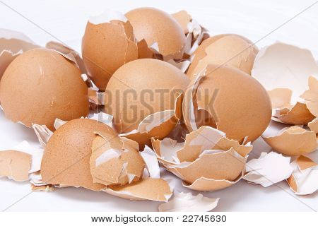 Fresh Eggs Shell  Scattered